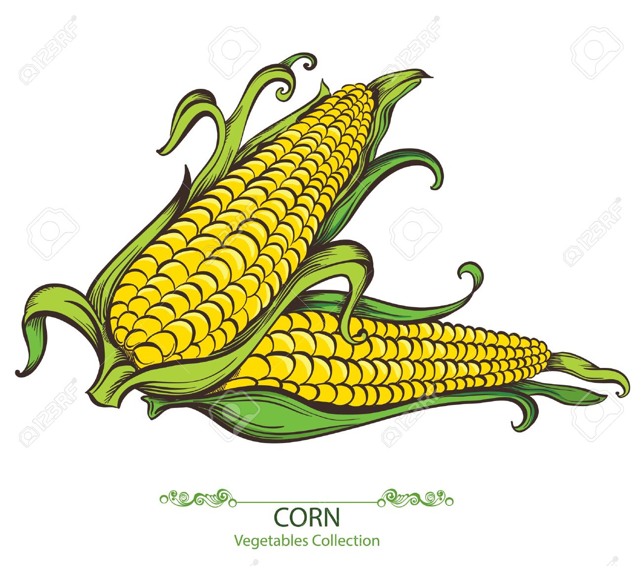 Sweet corn. Vector hand drawn vegetables isolated on white background - 37313183