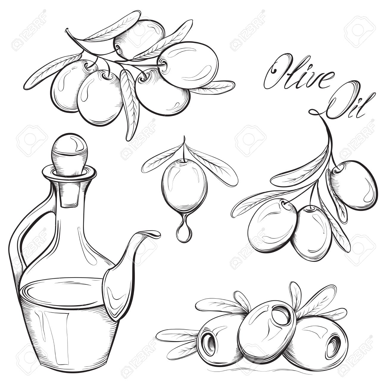 Hand drawn olive set. Olive oil and olive branch. Black and white vector illustration - 37379945