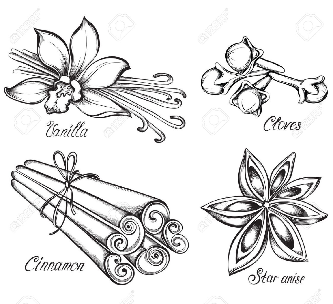 Set of kitchen spices. Vanilla, cinnamon, cloves, star anise. Hand drawn vector illustration. - 53584896