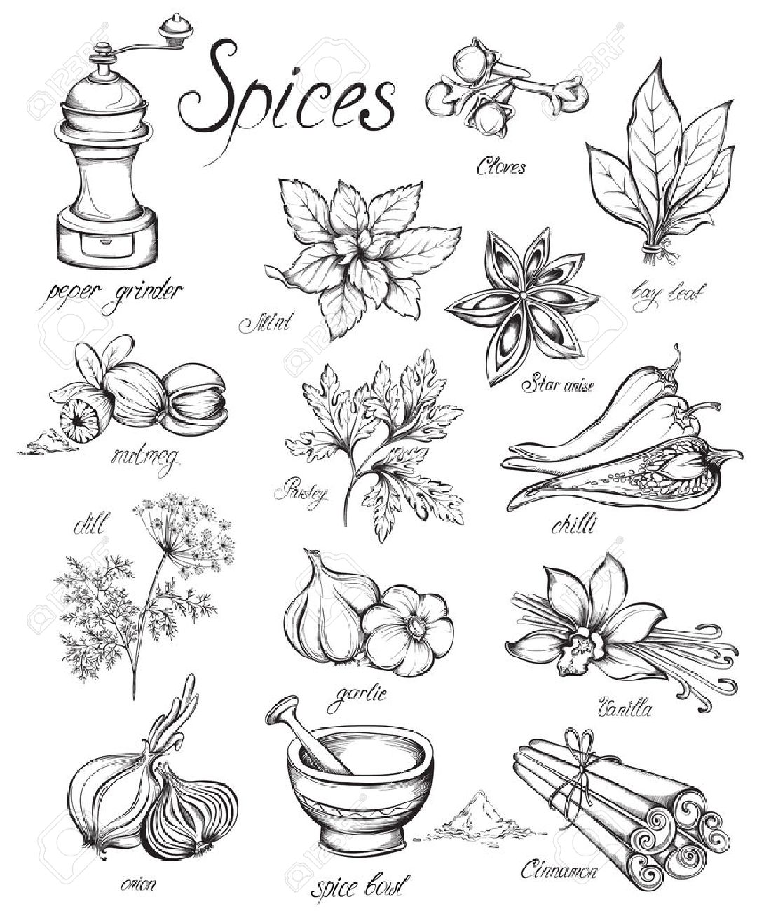 Set kitchen herbs and spices. Hand drawn vector illustration - 53584915