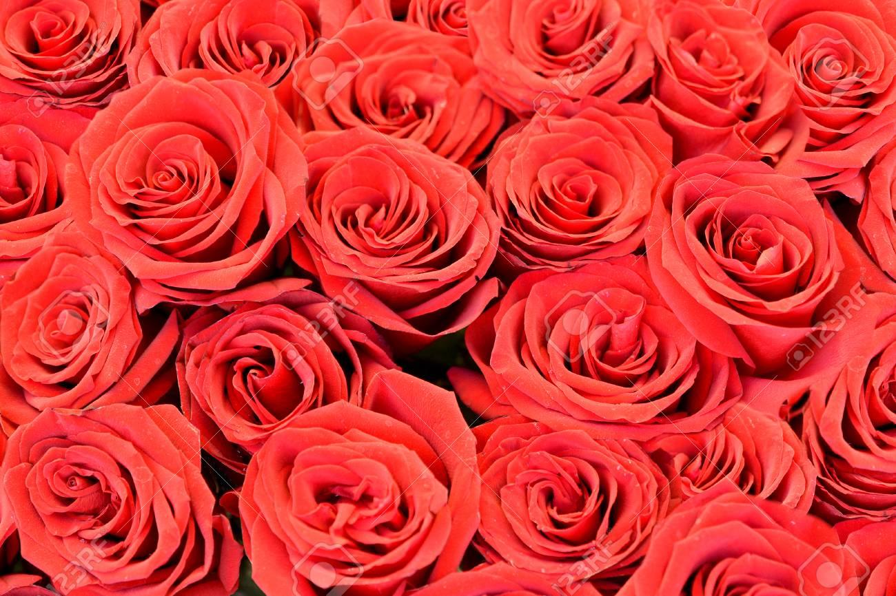 自然赤いバラ背景 の写真素材 画像素材 Image