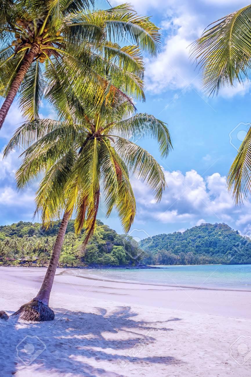 Carribean Sun Sea Paradise Beach Sand and Palm Tree print Tropical Nature Photography
