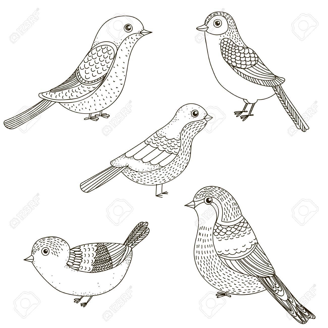 Vector Conjunto De Aves De Dibujos Animados De Línea Arte