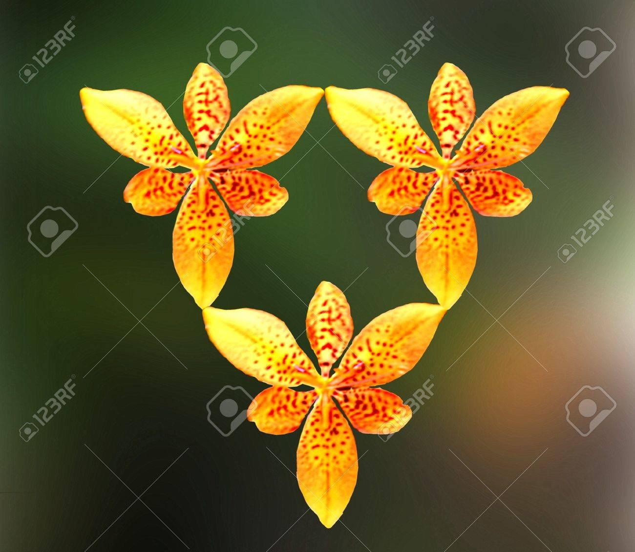 Lily de BlackBerry. Colores naturales. Abstracción de geometría.       Foto de archivo - 9169563