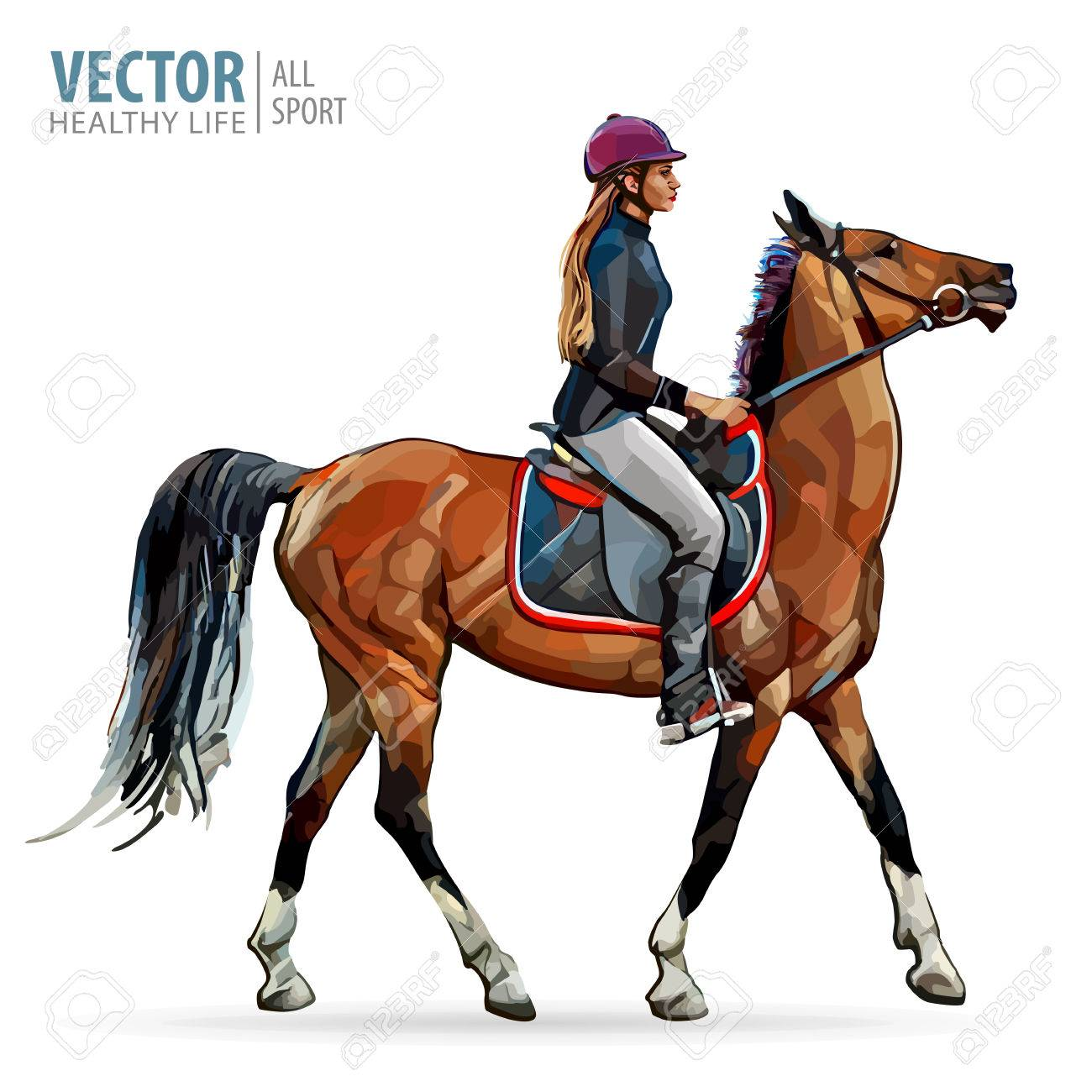 Horse With Rider Jockey On Horse Horse Riding Woman On Horse Royalty Free Cliparts Vectors And Stock Illustration Image 83088023