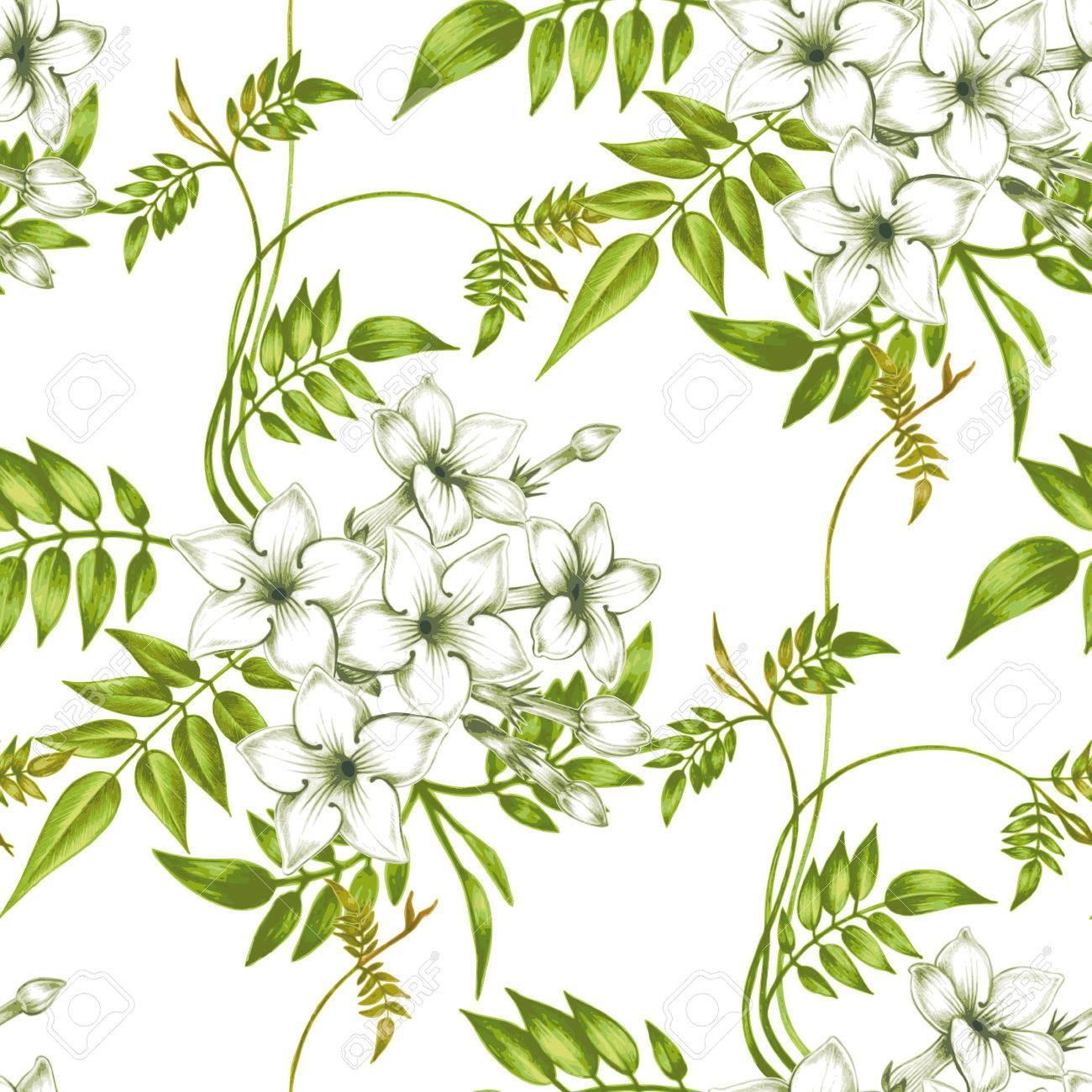 Vector Seamless Background Jasmine Flowerssign For Fabrics