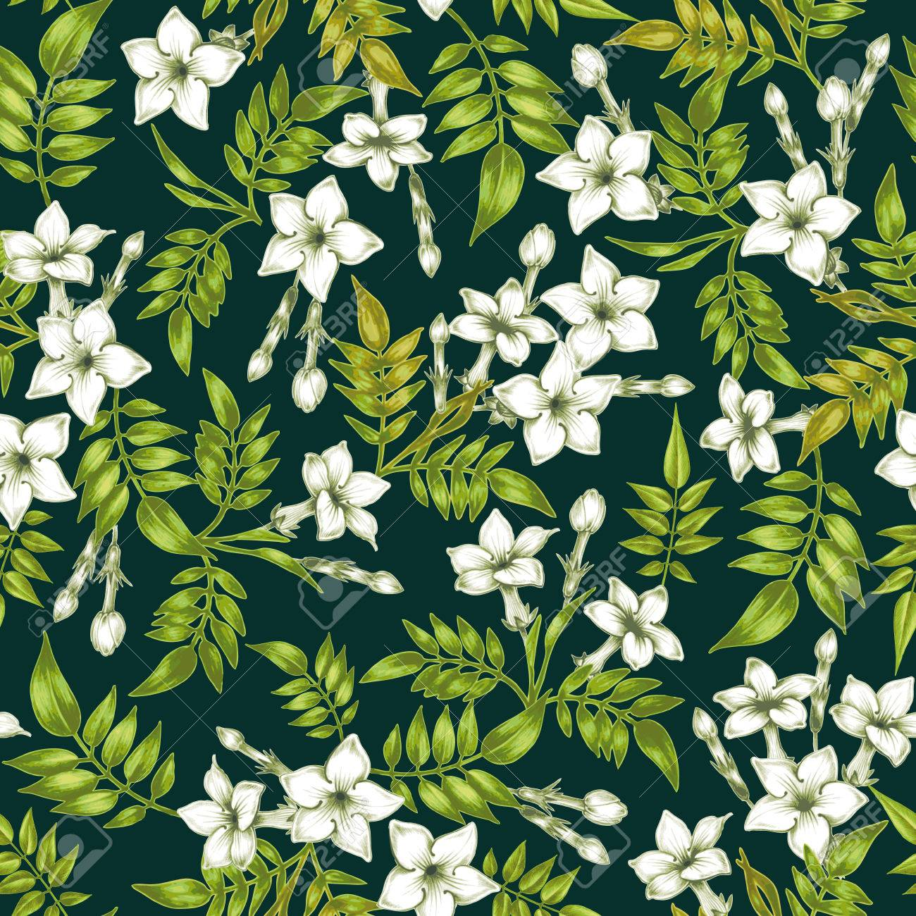 Vector seamless background. Jasmine flowers.Design for fabrics, textiles, paper, wallpaper, web. Vintage. Floral ornament. - 55307027