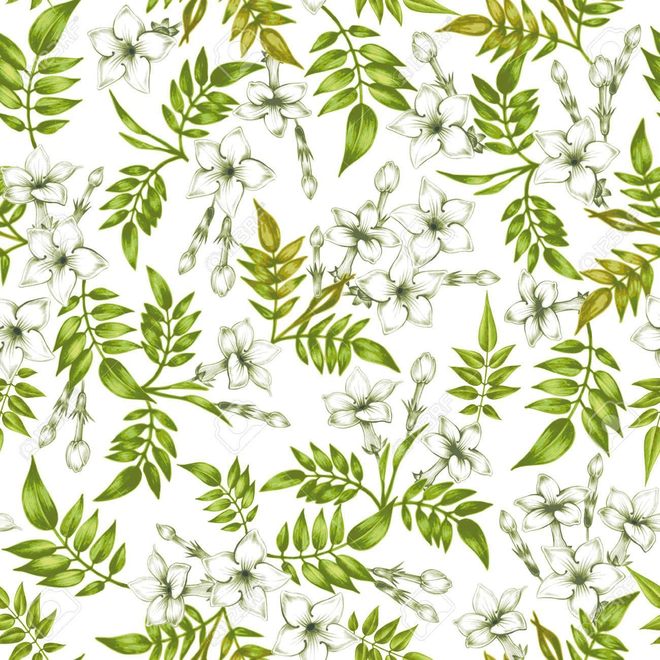 Vector seamless background jasmine flowerssign for fabrics vector seamless background jasmine flowerssign for fabrics textiles paper wallpaper mightylinksfo