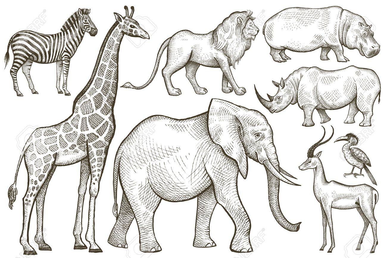 アフリカの動物を設定します象キリンシマウマライオンカバ