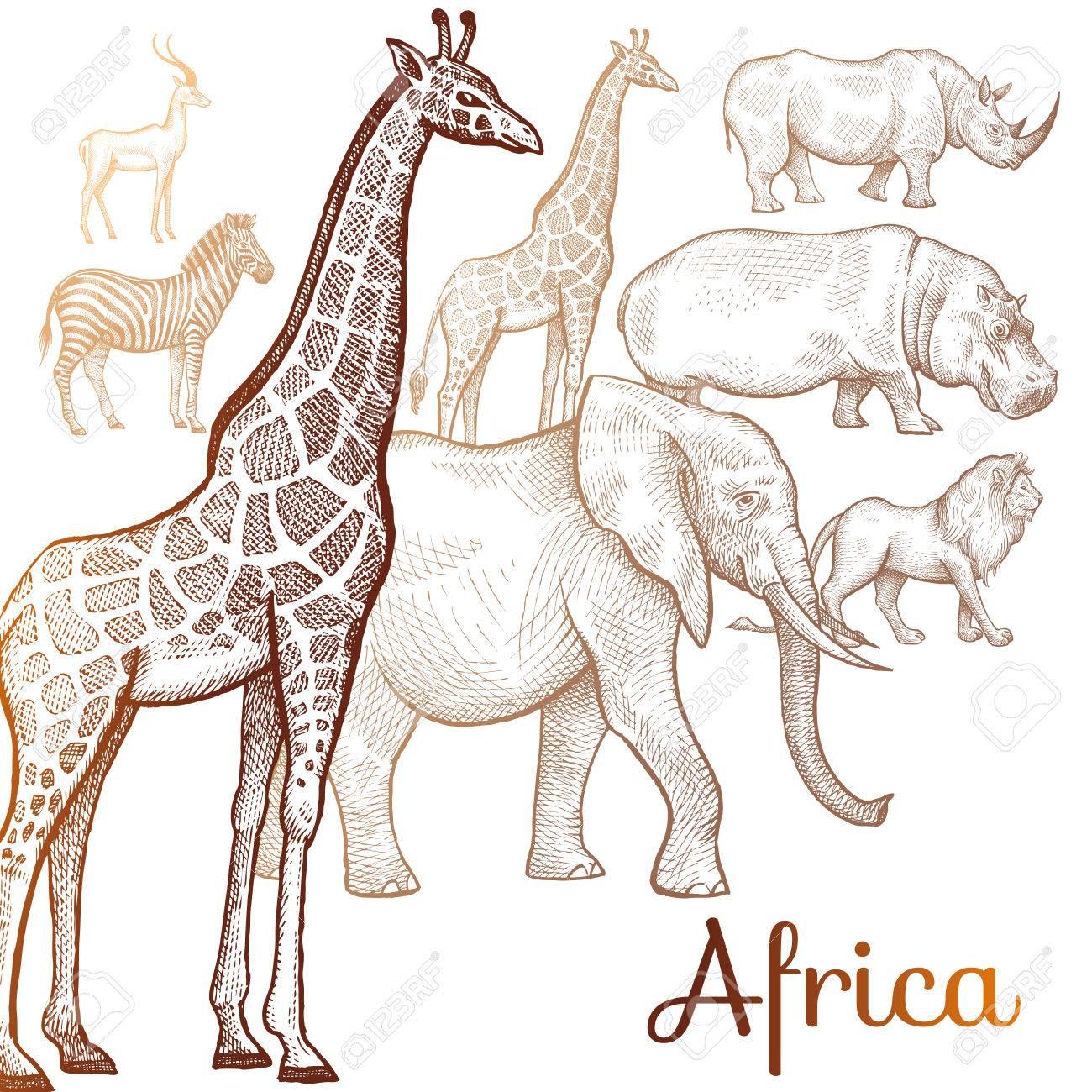 giraffe clipart.html
