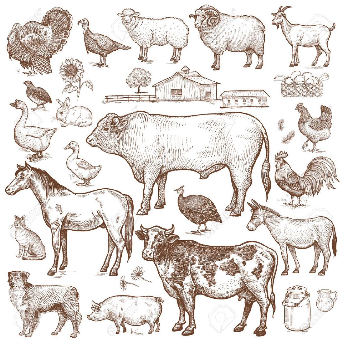 Vector large set farm theme. Animals cattle, poultry, pets, landscape. Objects of nature isolated on white background. Drawings for text illustration, decoupage, design covers, signage, posters. - 67176534