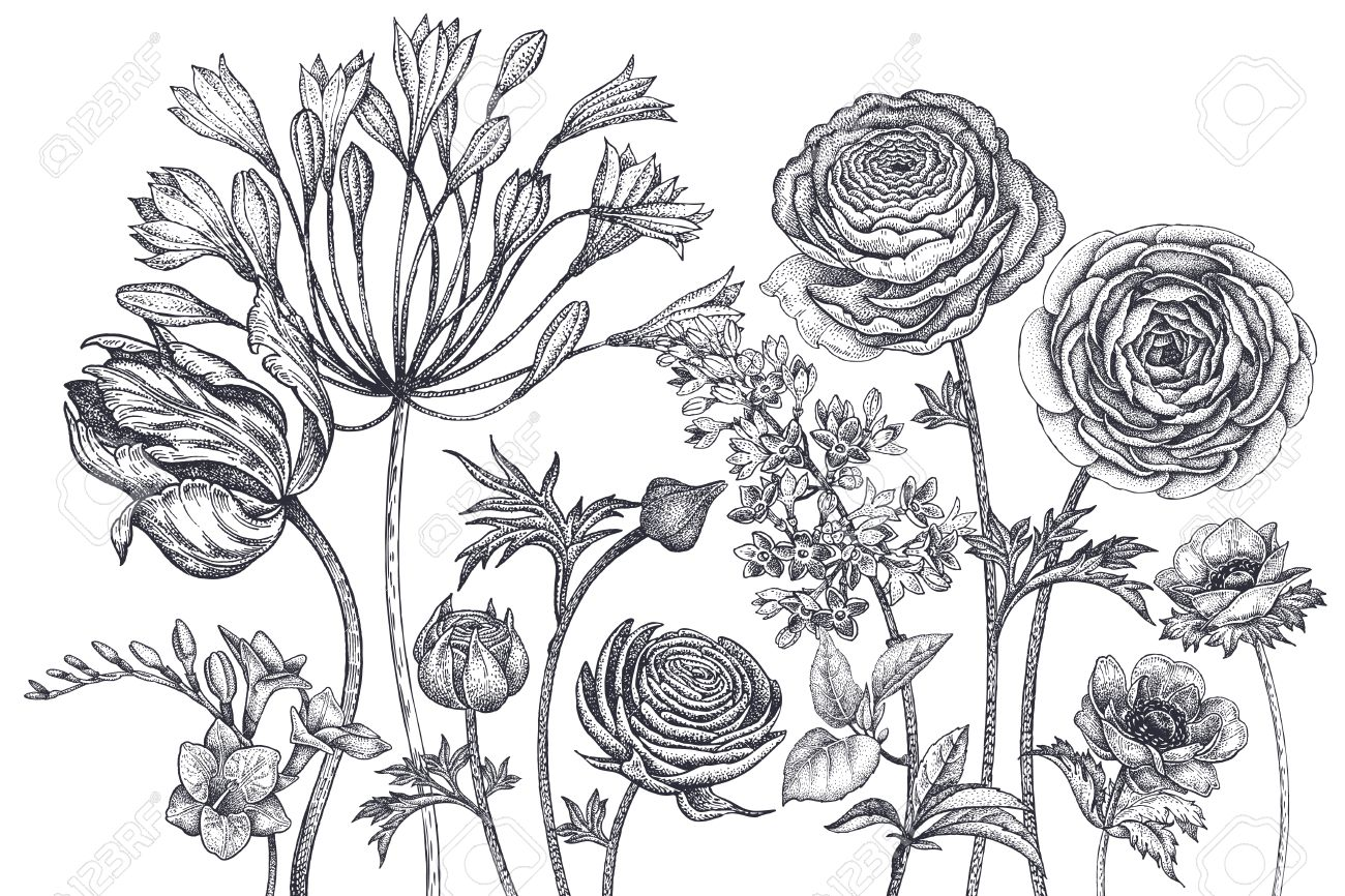 Bouquet of spring flowers blooming hand drawing tulip african bouquet of spring flowers blooming hand drawing tulip african lily ranunculus anemones mightylinksfo