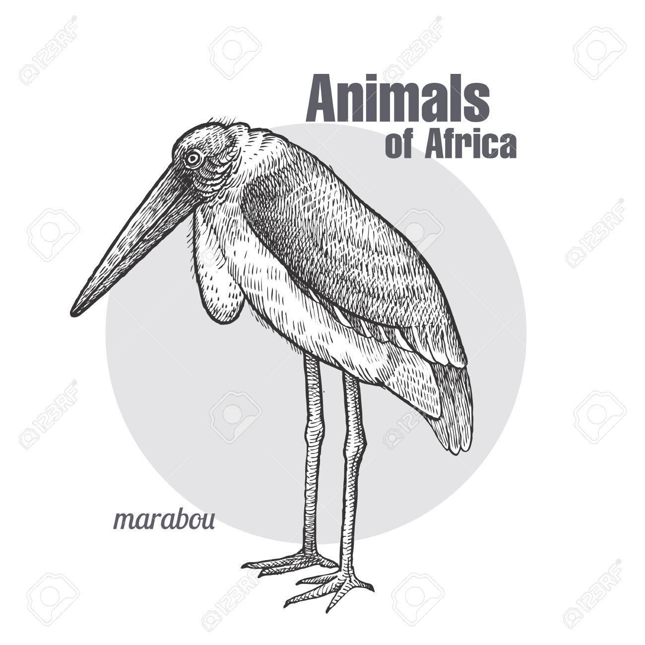 Disegno A Mano Di Uccello Marabù Serie Di Animali Africani Stile