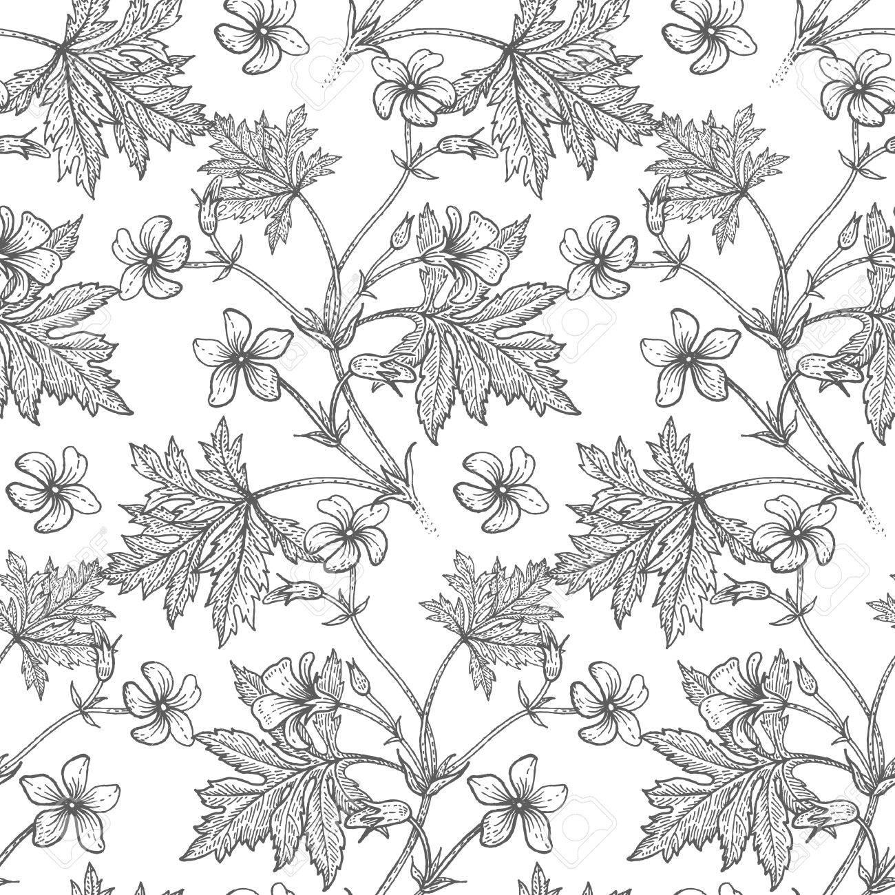 Geranium Flower. Seamless Floral Pattern. Vector Illustration ...