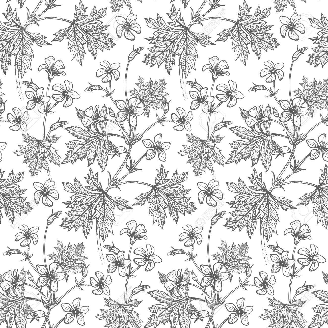 Papier Peint Noir Et Blanc Graphique fleur de géranium. motif floral sans couture. illustration vectorielle.  dessin artistique art. graphiques en noir et blanc. gravure vintage.