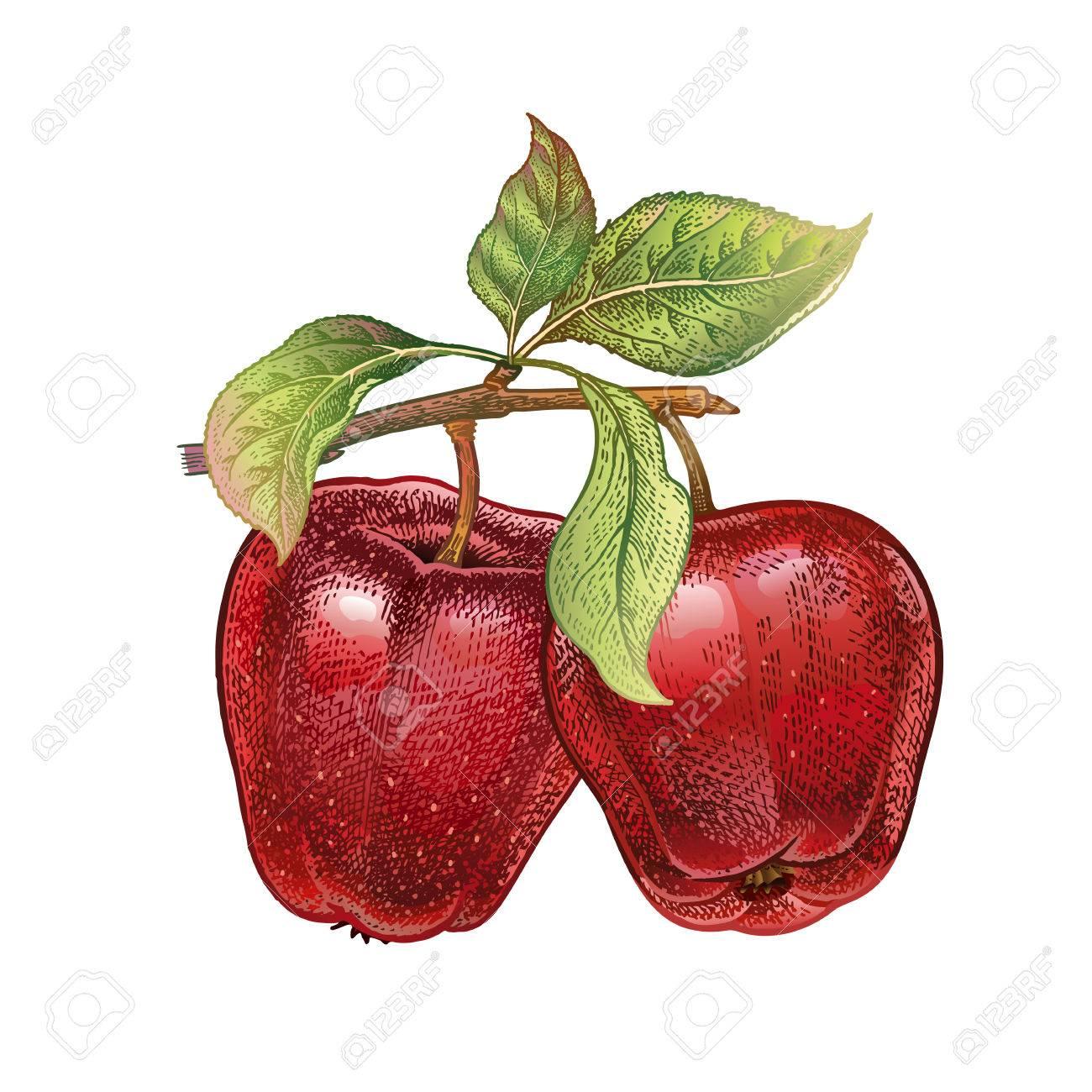 Pomme Dessin à La Main Réaliste Avec Des Crayons De Couleur