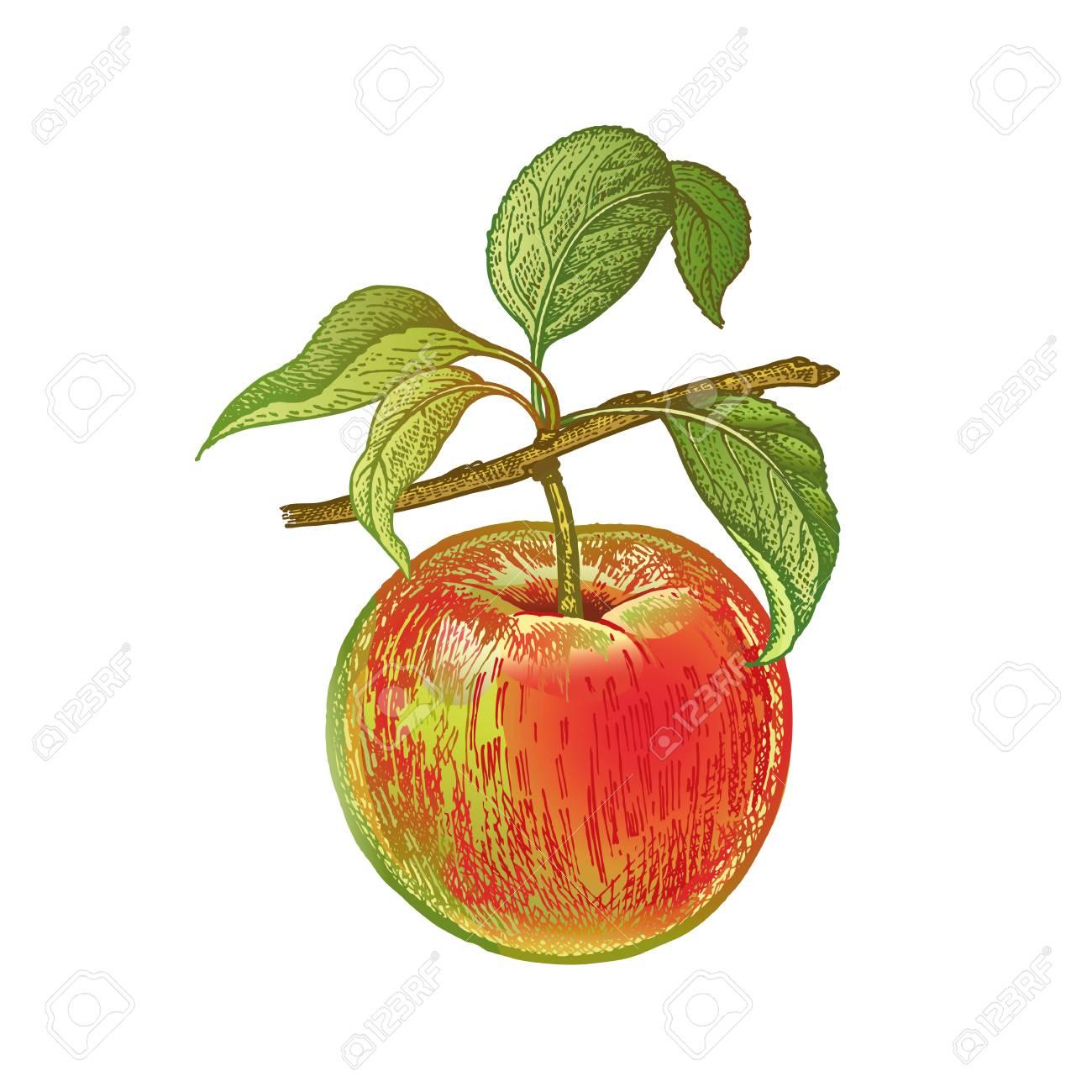 Pomme Dessin A La Main Realiste Avec Des Crayons De Couleur