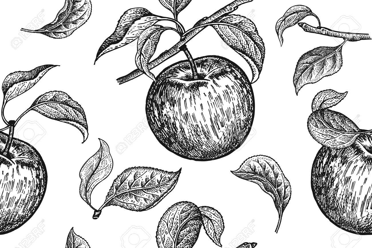 Seamless Pattern. Realistic Fruit, Branch And Apple Tree Leaf ...