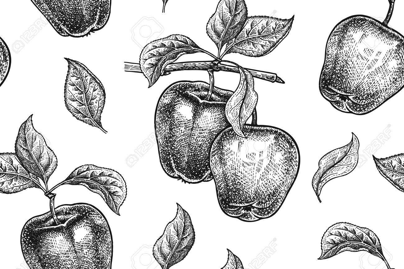 Nahtlose Muster. Realistische Frucht, Zweig Und Apfelbaum Blatt ...