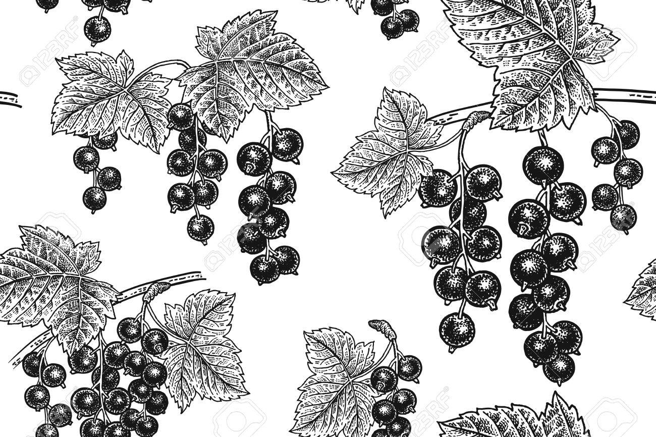 Black Currant Berries. Seamless Pattern. Realistic Fruit, Branch ...