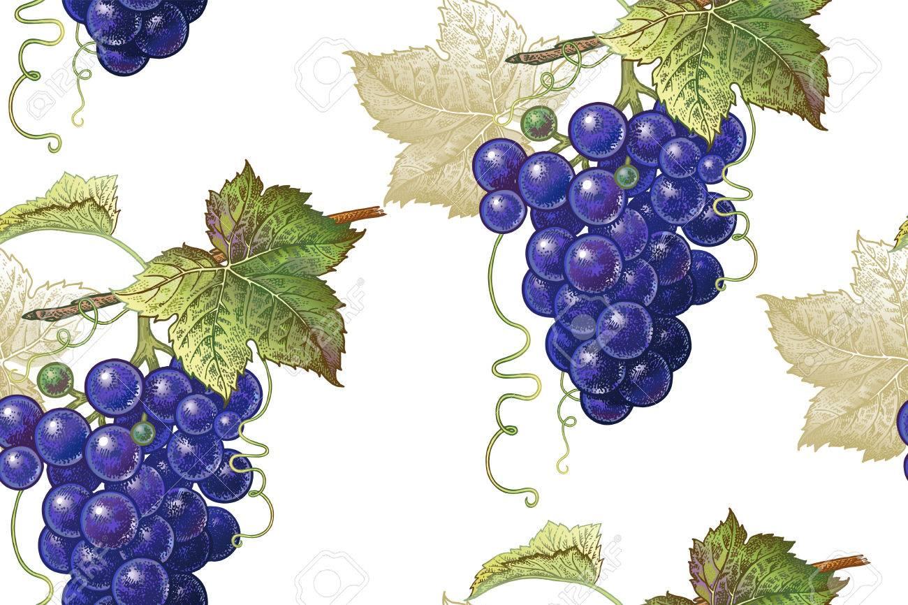Ein Nahtloses Botanisches Muster Mit Rebtrauben Auf Einem Weißen ...