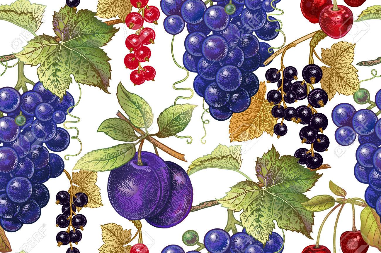 A Seamless Botanical Pattern With Grapes Plum Red And Black