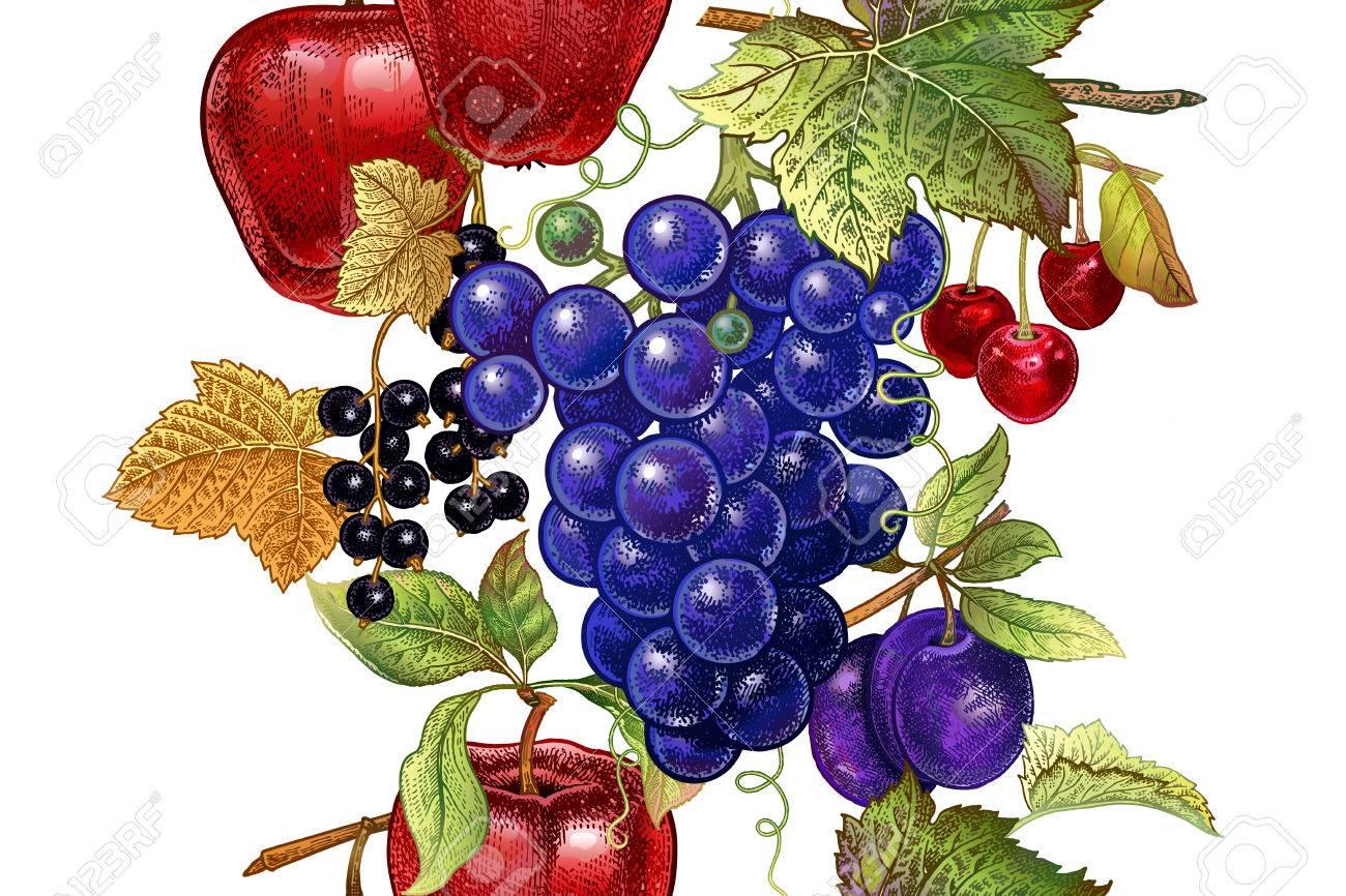 Un Patrón Sin Fisuras Con Frutas Manzana, Uva, Cereza, Ciruela ...