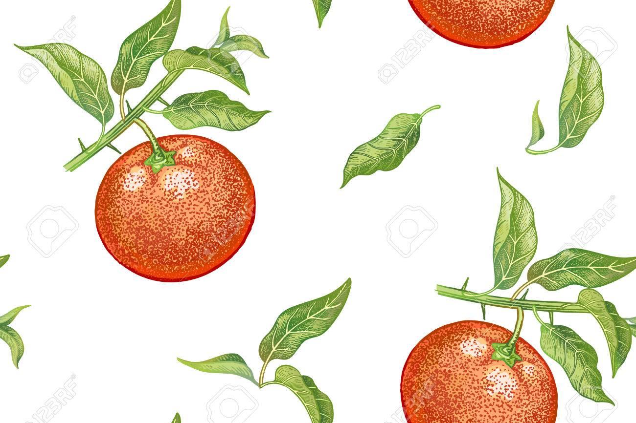 Un Patrón Sin Costuras Con Mandarinas. Planta De Ilustración ...