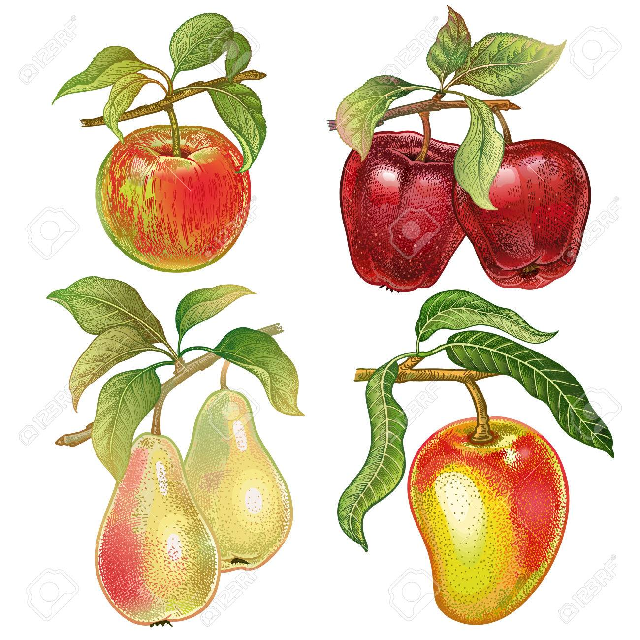 Berries And Fruits Set. Realistic Hand Drawing Made With Colored ...