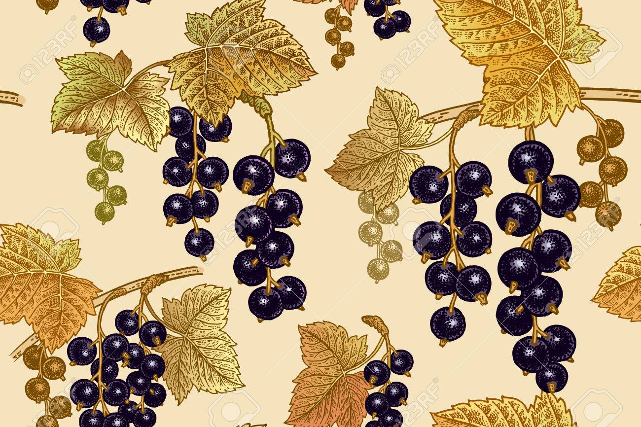 Black Currant Berries Seamless Pattern Realistic Fruit Branch