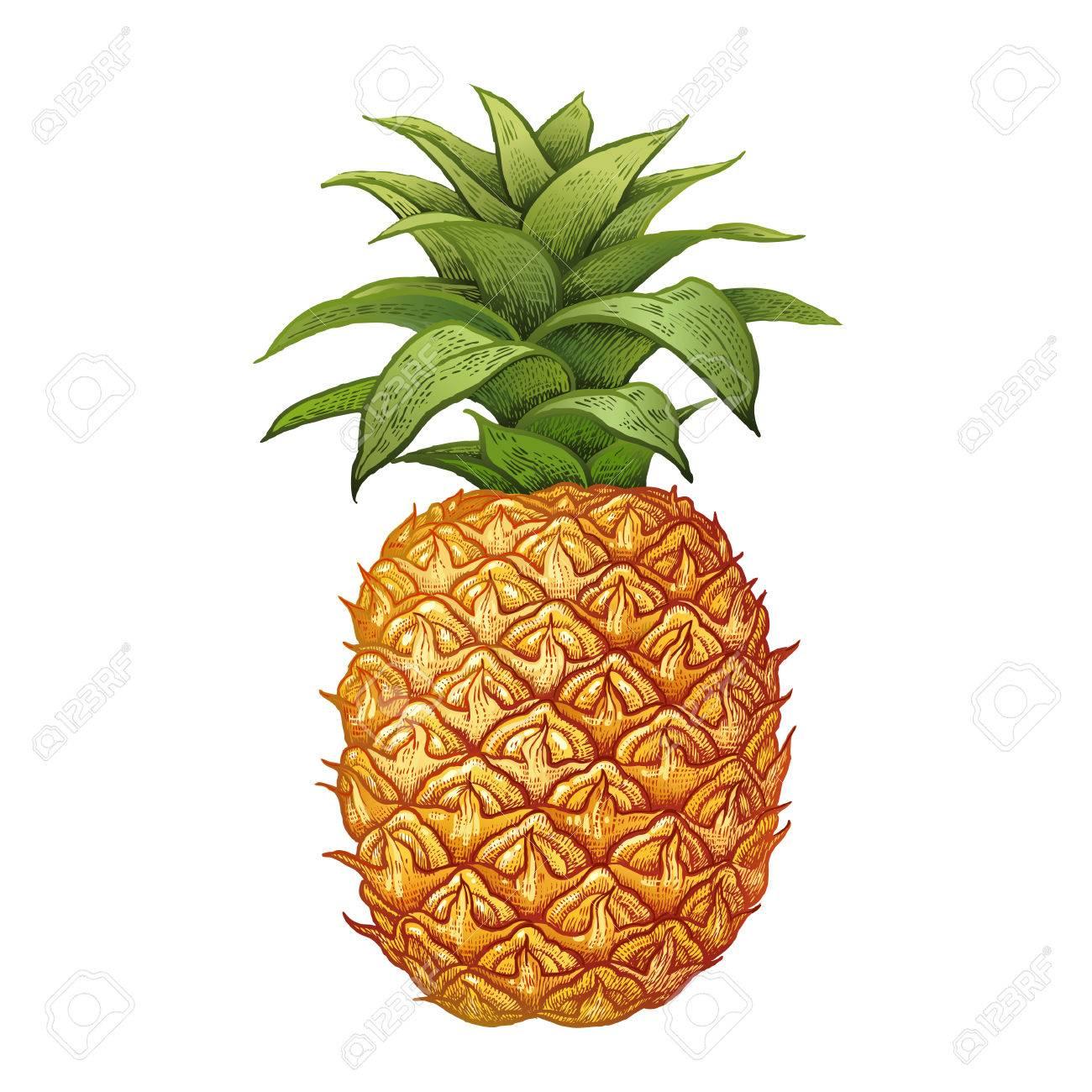 Ananas Dessin à La Main Réaliste Fait Avec Des Crayons De Couleur Illustration Vectorielle Fruit Isolé Sur Fond Blanc Plante Pour Décorer Les