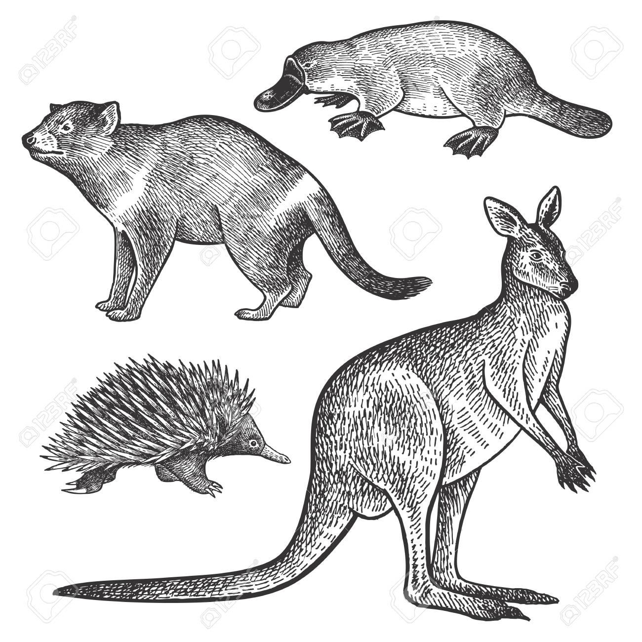 Tasmanischer Teufel, Schnabeltier, Wallaby Oder Känguru, Echidna ...