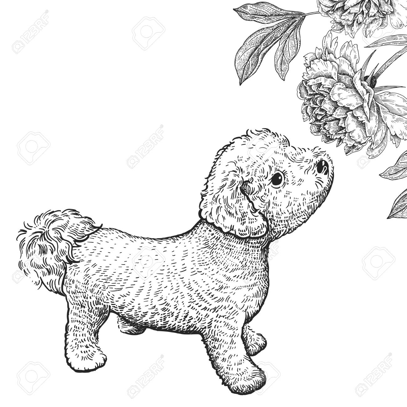 Cute Puppy Sniffing Peony Flower Home Pet Isolated On White Royalty Free Cliparts Vectors And Stock Illustration Image 110232647