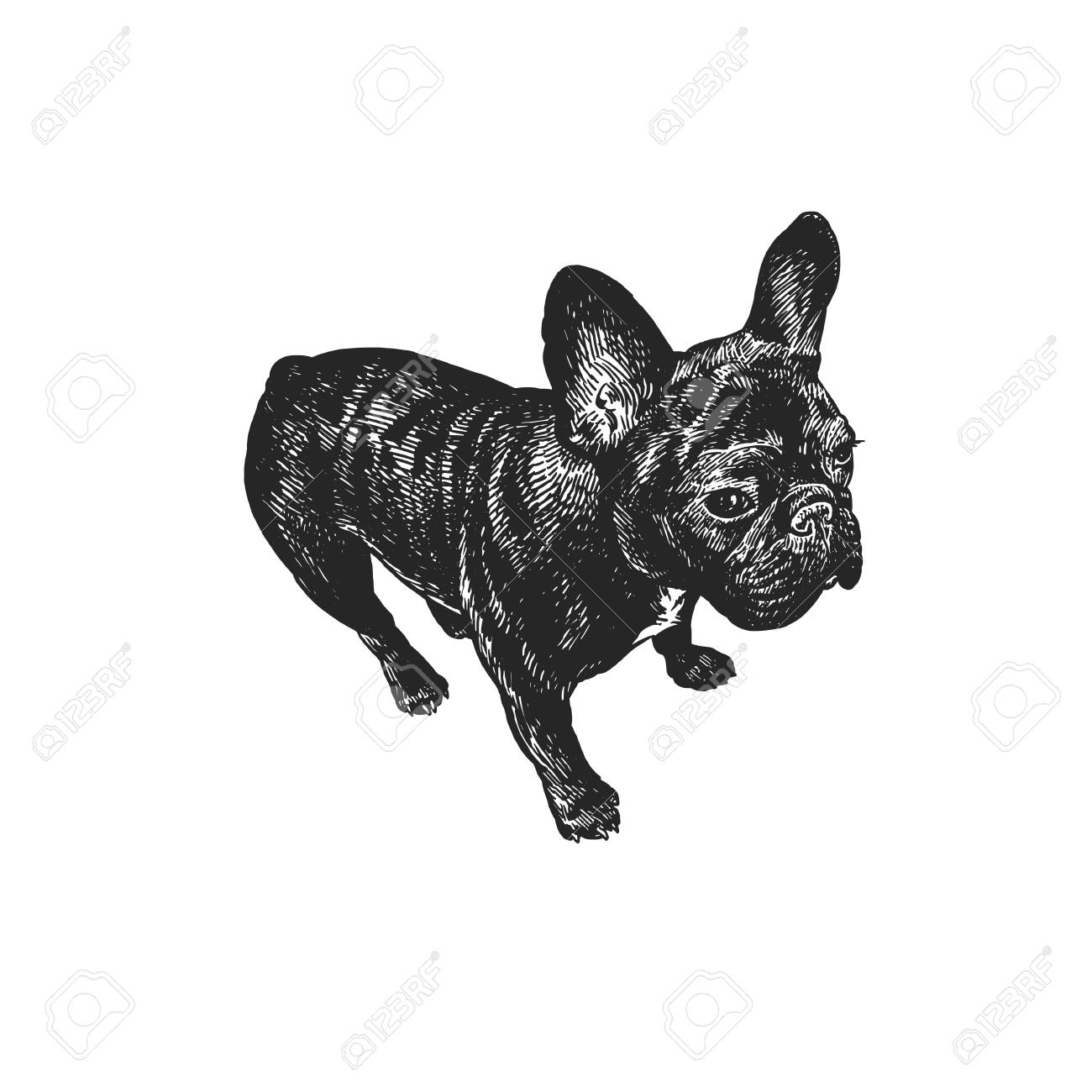 Cute puppy  Home pet isolated on white background  Sketch  Vector