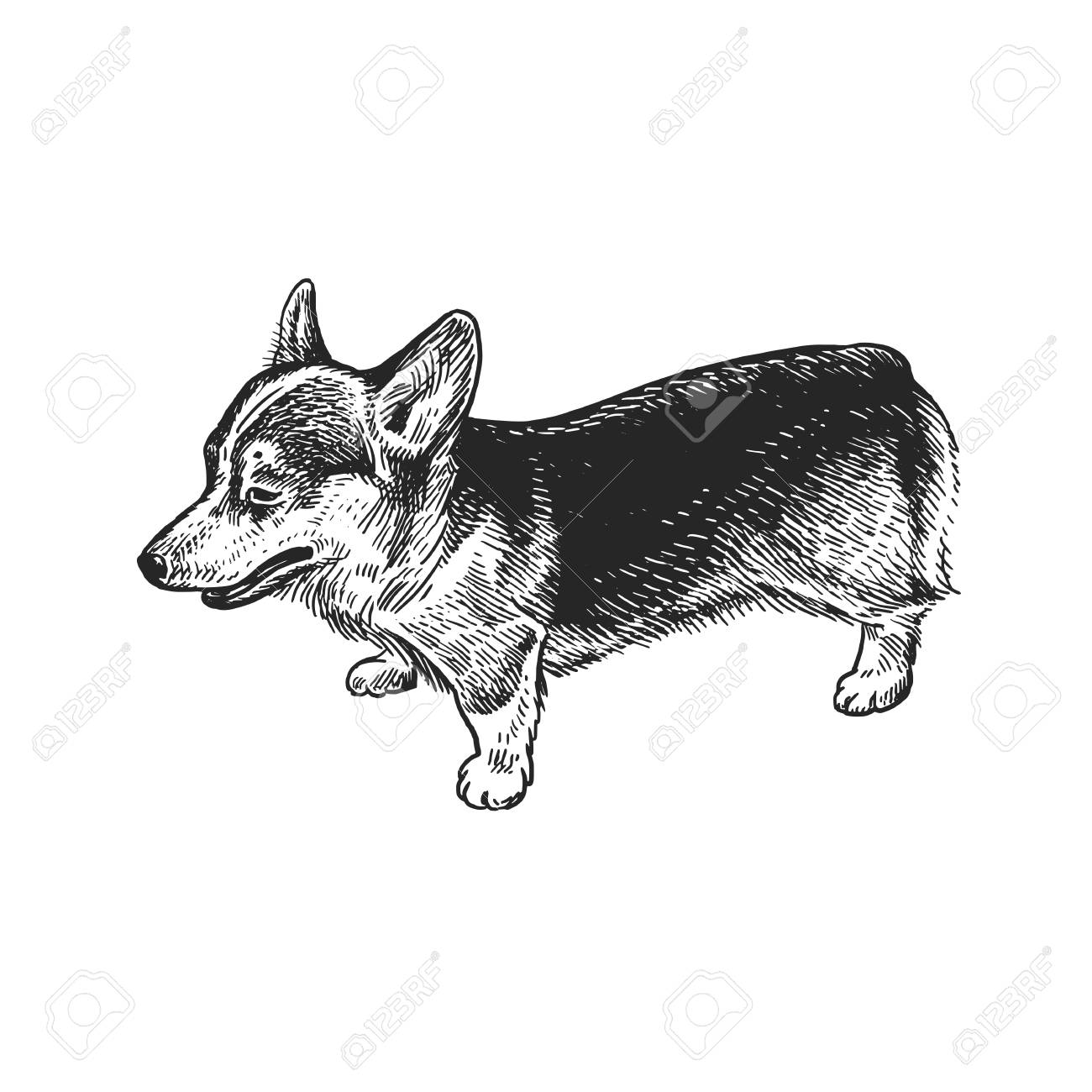 Cute Puppy Home Pet Isolated On White Background Sketch Vector Royalty Free Cliparts Vectors And Stock Illustration Image 109815348