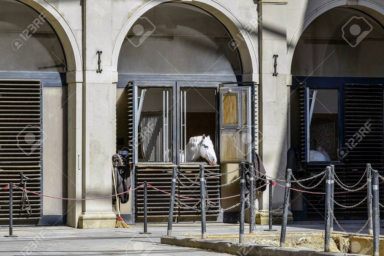 Young White Horse Looks Out Of The Window Of A Stable Located Stock Photo Picture And Royalty Free Image Image 128808851
