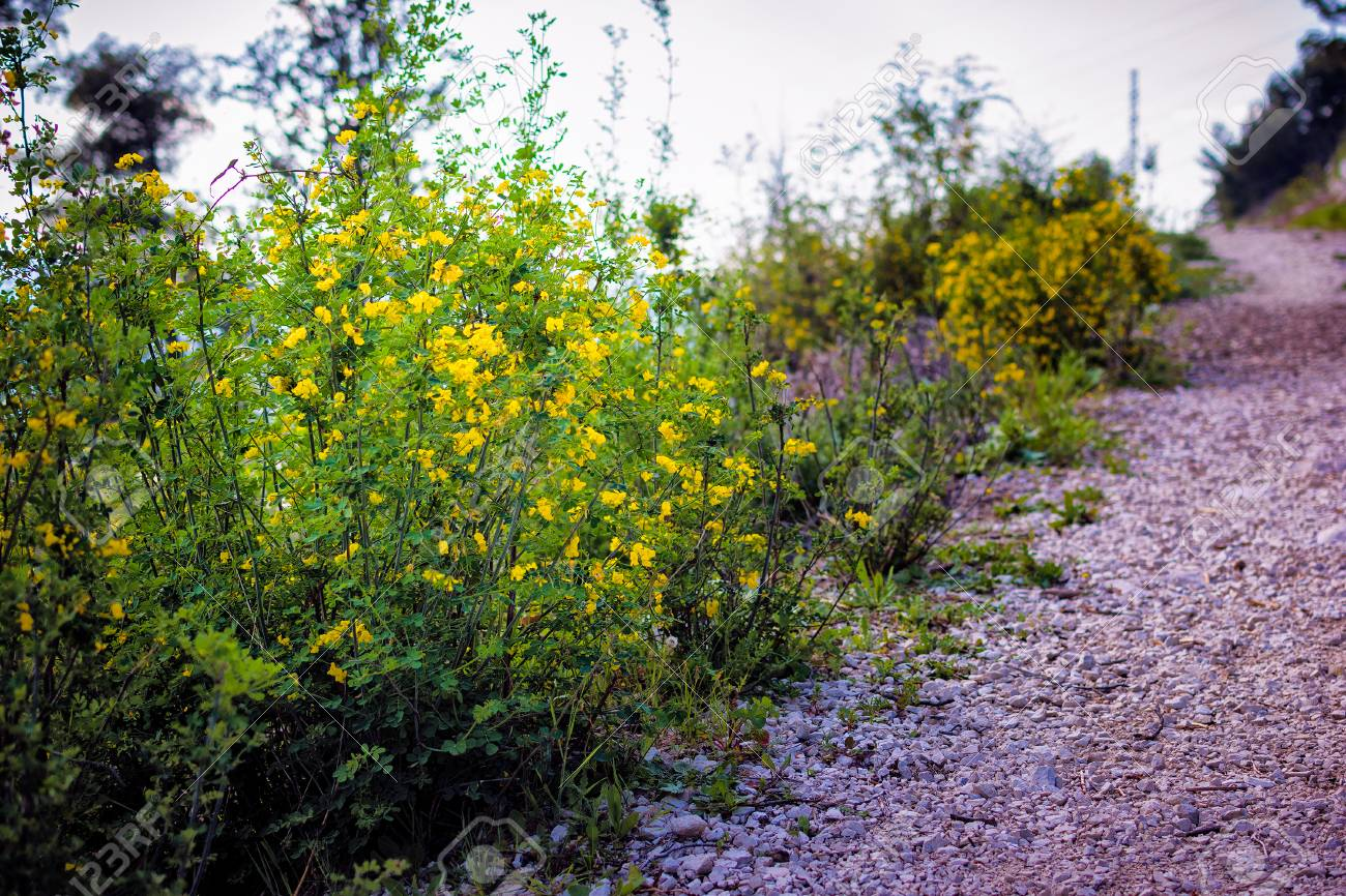 Small Yellow Flowers And Green Bushes Growing In A Meadow In