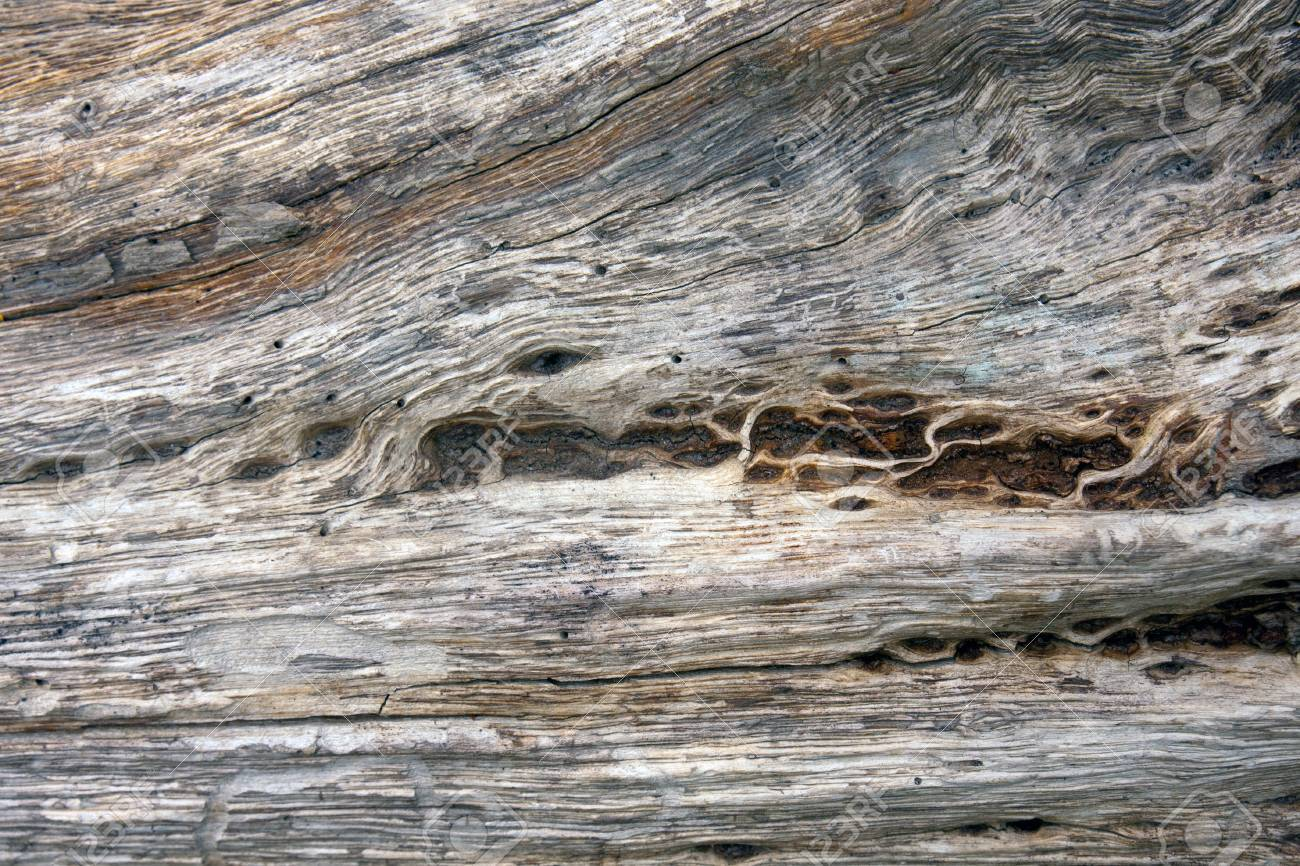 Natural Old Wood Texture Stock Photo - 13629804