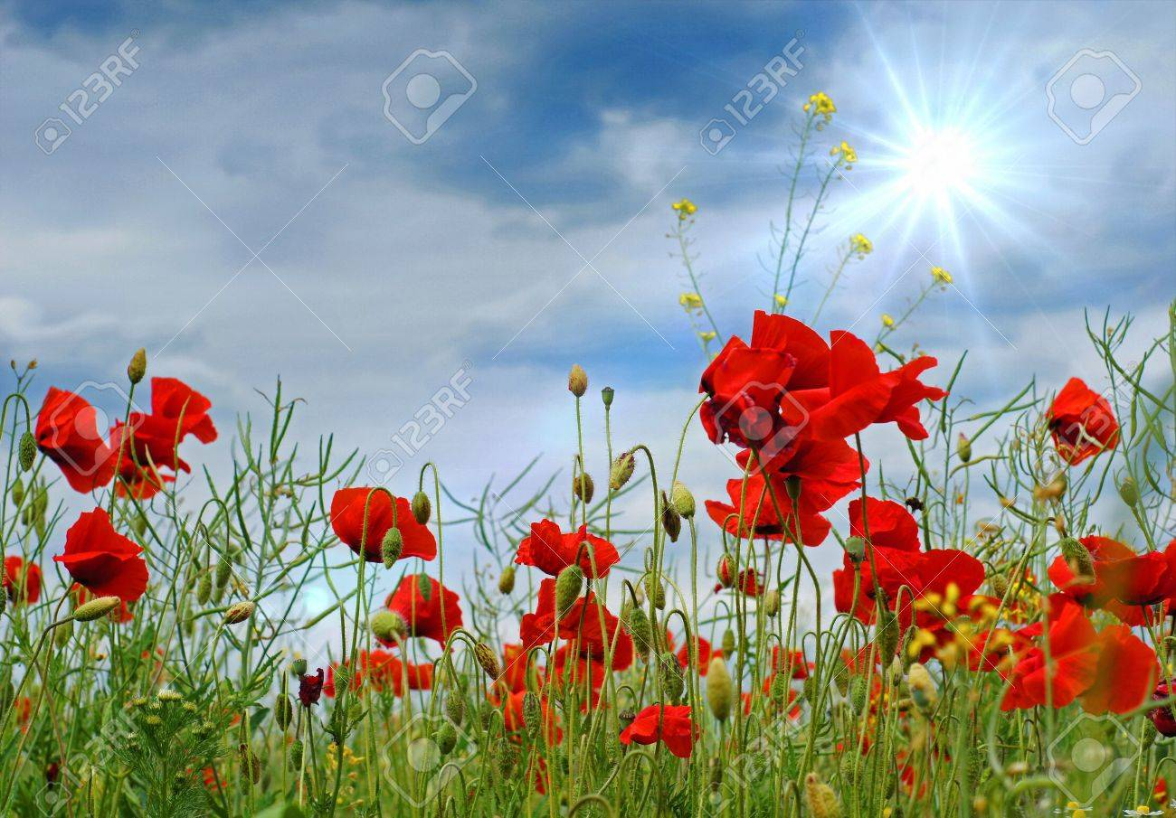 Poppies and a blue sky with sun - 18655223
