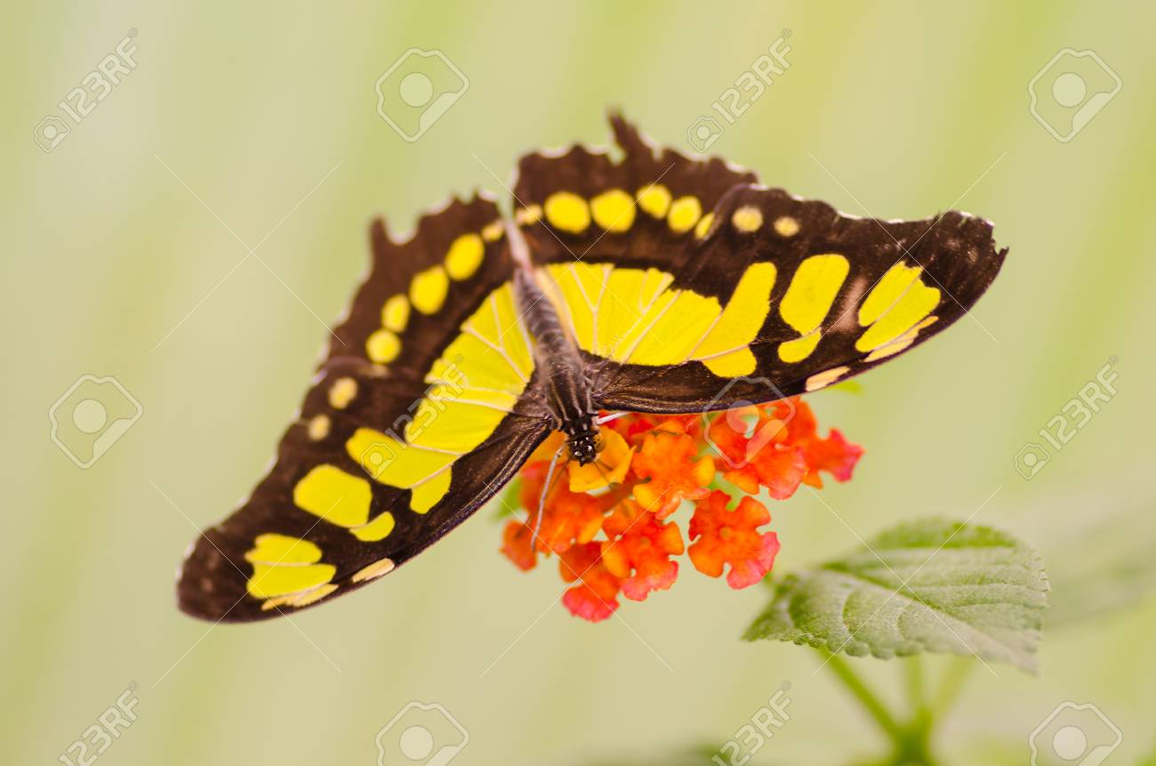 butterfly on a flower Standard-Bild - 23364048