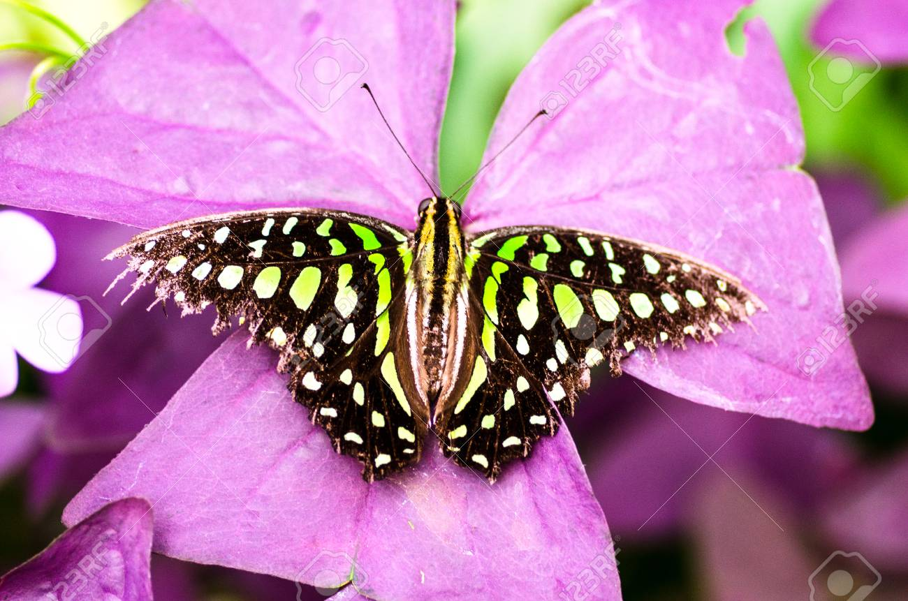 green butterfly Standard-Bild - 23364049
