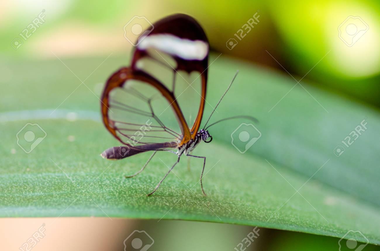 butterfly on a leave Standard-Bild - 23364050