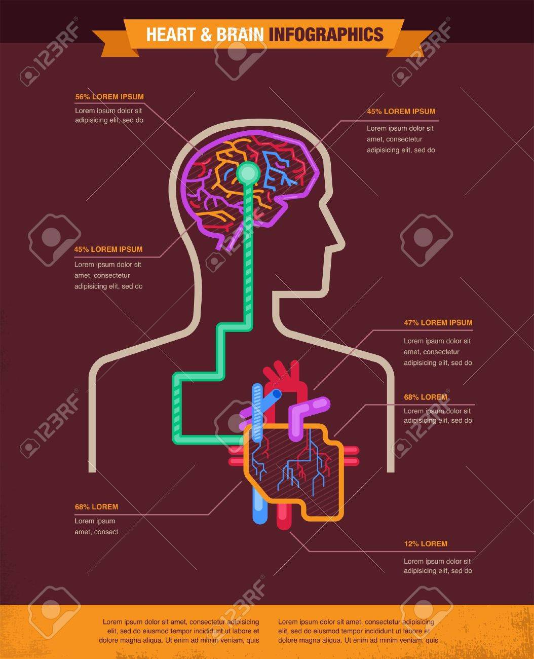 Brain and heart connected - vector illustration infographic Stock Vector - 20893747