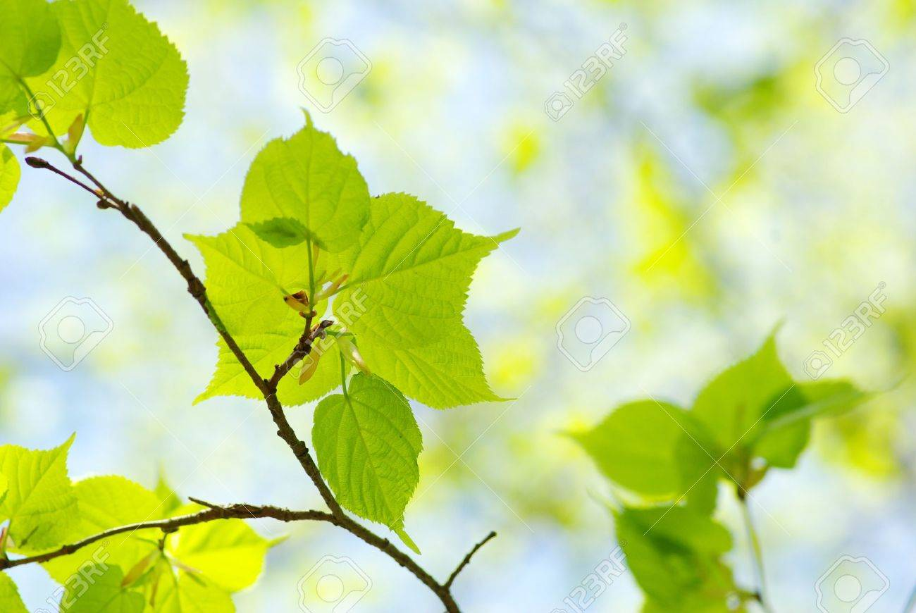 Green leaves over abstract background - 8009962