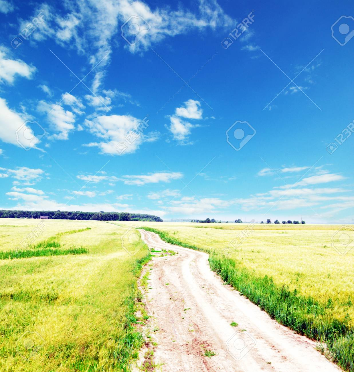 Fields of wheat at the end of summer fully ripe Stock Photo - 11188446