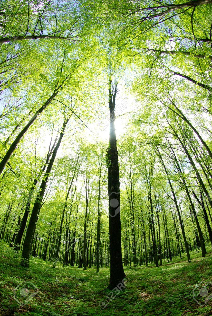 forest landscape in the morning Stock Photo - 11510687