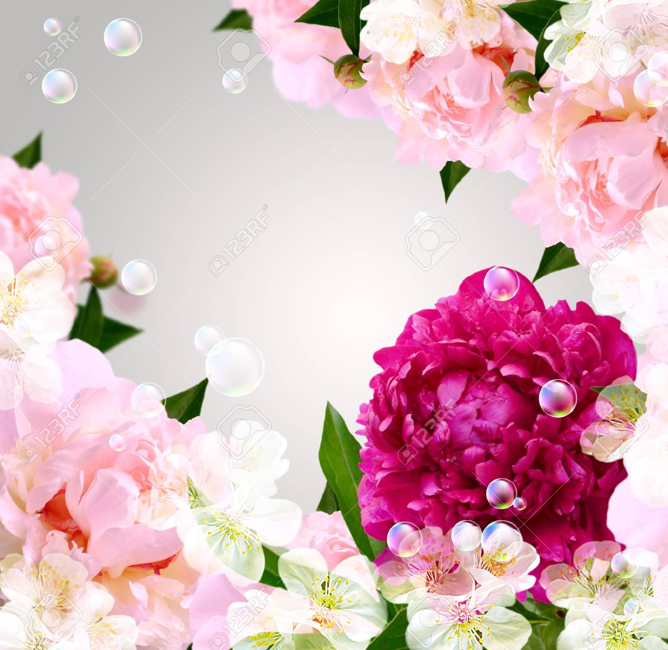 Card with peony, white flowers and bubbles Stock Photo - 13979119