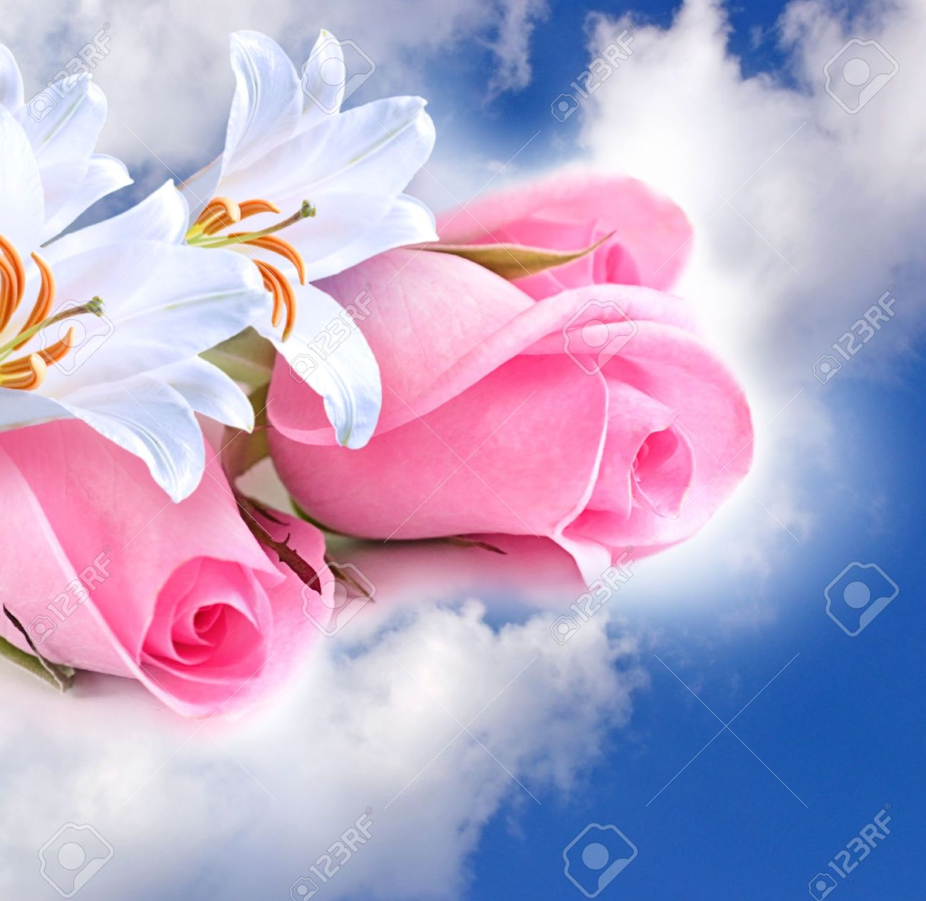 Pink roses and lilies in the clouds - 14311430