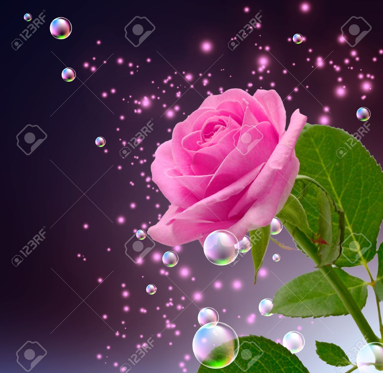 Rose, bubbles and stars - 14873890