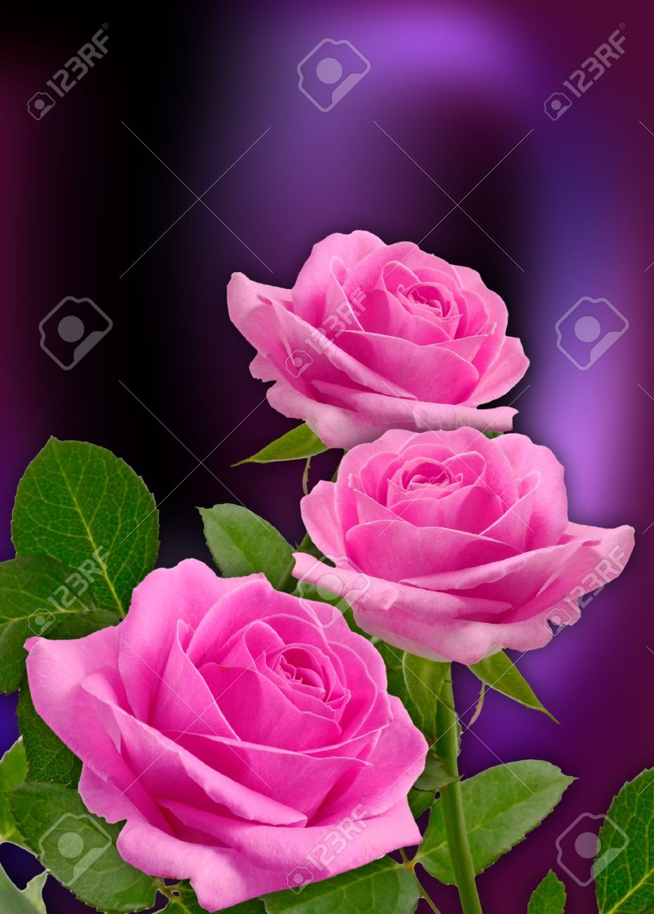 Card with pink roses - 15036155